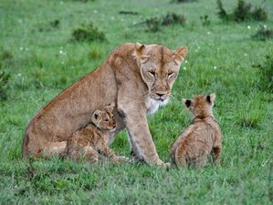3 Days Maasai Mara National Reserve Budget Safari