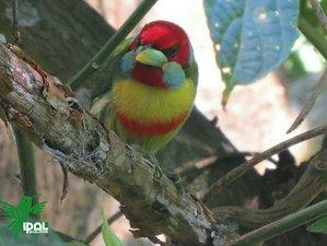 3 Day Bird Watching and Trekking Holiday in Huayopata, Cusco