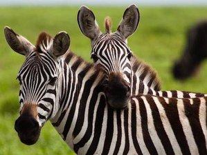 2 Days Thrilling Wildlife Safari in Lake Mburo National Park, Uganda