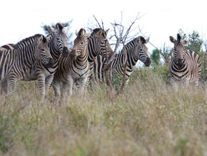 3 Days Thrilling Masai Mara Safari in Kenya
