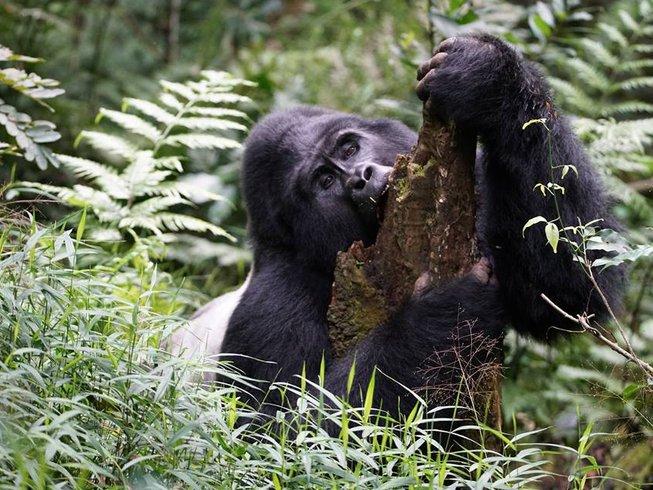 20 Days Gorilla Trekking and Safari Tour in Uganda
