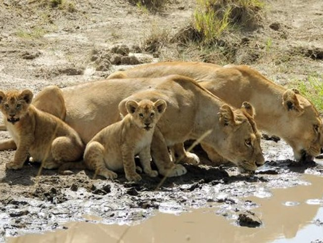 7 Days Journey To The Wild Safari in Kenya