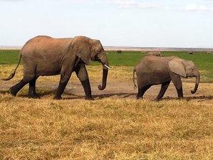 6 Days Picturesque Safari in Manyara, Tarangire, Serengeti, and Ngorongoro, Tanzania