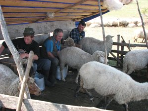 5 Days Lamb & Green Feast Transylvanian Cooking Tour