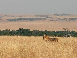 4 Days Maasai Mara and Lake Nakuru Safari in Kenya
