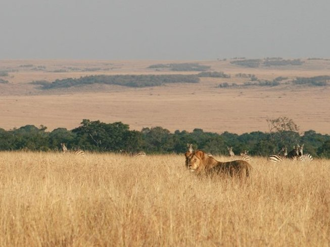 4 Days Maasai Mara and Lake Nakuru Safari in Kenya
