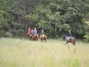 4 Day Ecological Horseback Riding Vacation in Chiapas, México