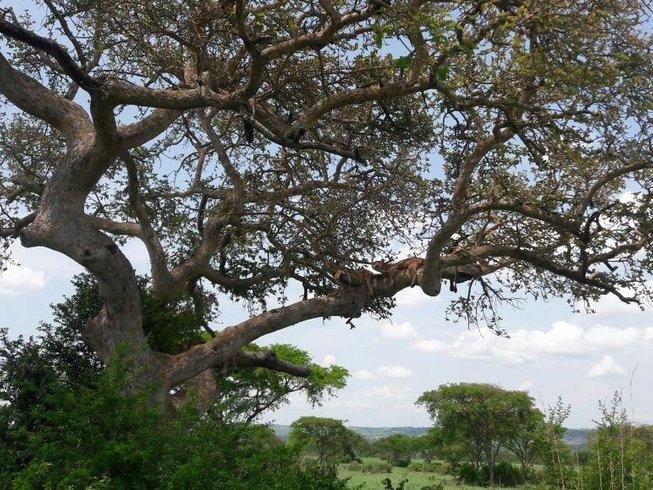 10 Days Wildlife Game Viewing and Gorilla & Chimpanzee Safari in Uganda