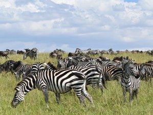 12 Days Maasai Mara, Nakuru, Amboseli, Manyara, and Serengeti Safari in Kenya and Tanzania