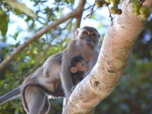 3 Days Kinabatangan River Cruise and Wildlife Tour in Sabah, Malaysia