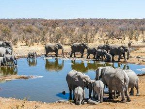 3 Days Magical Wildlife Experience and Safari in Etosha National Park, Namibia