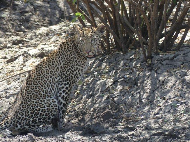 7 Days Budget Safari in Tanzania