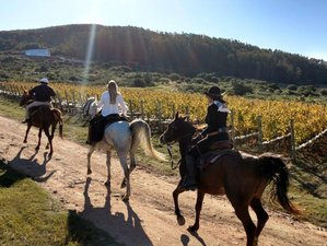 7 Days Adult-Only Horse Riding Tour in Maldonado, Uruguay