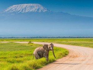 3 Days Amboseli National Park Safari with a Modern Train Experience in Kenya