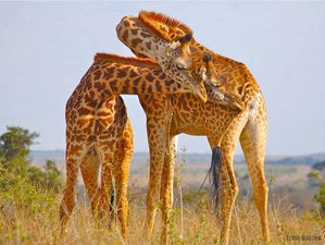 10 Days Best of Wildlife Safari Budget Group Tour in Kenya and Tanzania