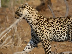4 Day Kruger via Panorama Private Safari in Kruger National Park, South Africa