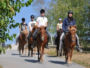 8 Days Green Karst Trail Horse Riding Holiday in Trnje, Slovenia