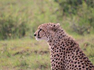 5 Days Kenya Wildbeest Migration Safari in Maasai Mara and Nakuru