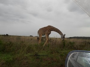 6 Days Classic Safari Tour in Amboseli, Tsavo East, and Tsavo West National Park, Kenya
