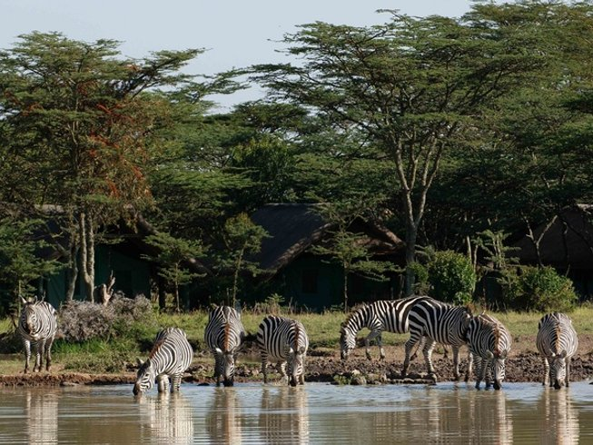 4 Days Luxury Safari in Tanzania