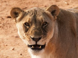 7 Days Namibian Highlights Safari