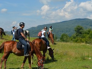 7 Days Horseback Riding Holiday for Families and Beginners in Prahova, Romania