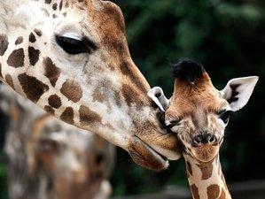 8 Days Highlight Safari in Kenya