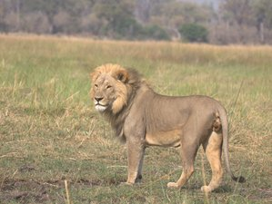 10 Days Victoria Falls Adventure and Safari in Botswana