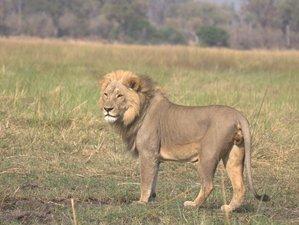 10 Días de Aventura y Safari en las Cataratas Victoria en Botsuana
