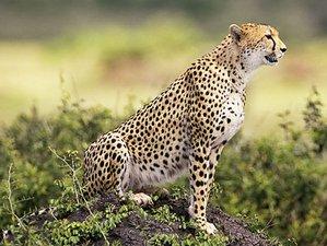 2 Days Wonderful Lake Nakuru National Park Safari Kenya