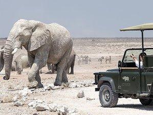 14 Days Ultimate Wildlife Safari in Namibia