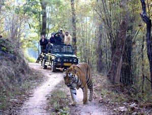 3 Days Jungle Calling Safari in India