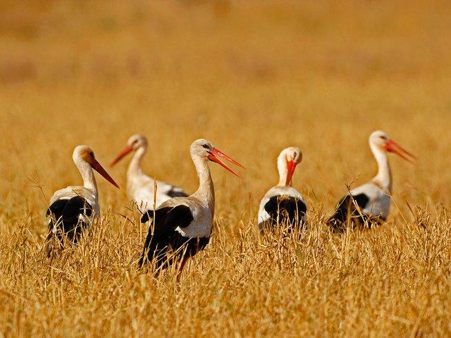 4 Days Fascinating Luxury Safari in Kenya
