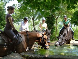 4 Day Amazing Horse Riding Holiday in Tuscany, Montieri