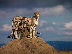 7 Days Camping Safari in Mara, Nakuru, Naivasha, and Amboseli, Kenya