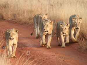 5 Days Majestic Safari in Kenya