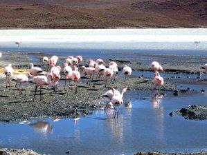 3 Day Salt Flats Regular Wildlife Tour in Uyuni, Bolivia