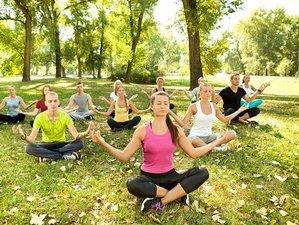 14 Day Ayurveda, Meditation, and Yoga Wellness Holiday in Kerala