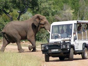 8 Days Luxury South African Safari