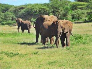 4 Days Classic Safari in Northern Tanzania