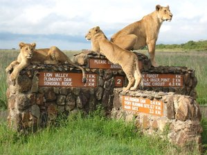 3 Days All Inclusive Camping Safari Masai Mara, Kenya