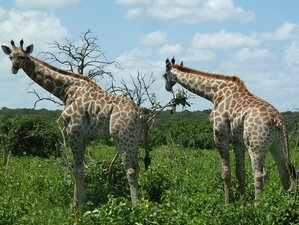 12 días de excepcional safari de avistamiento de jirafas en Botsuana