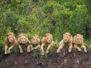11 días de crucero en bote, tours, vida salvaje y safari en Kenia