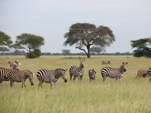 9 Days Majestic Game Parks Tanzania Safari