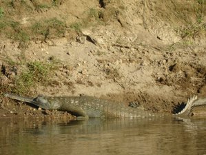 5 Days Incredible Koshi Tappu Wildlife Reserve Safari in Nepal