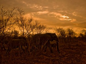 5 Days Breathtaking Safari in Kruger National Park, South Africa