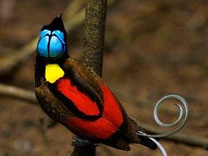 8 Day Sorong Low Land and Waigeo Raja Ampat Birds Of Paradise Safari in Papua