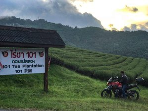 2 Day Doi Mae Salong Culture Immersion Guided Motorcycle Tour