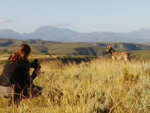 15 Days Unforgettable Wildlife Conservation Experience in Mossel Bay, South Africa