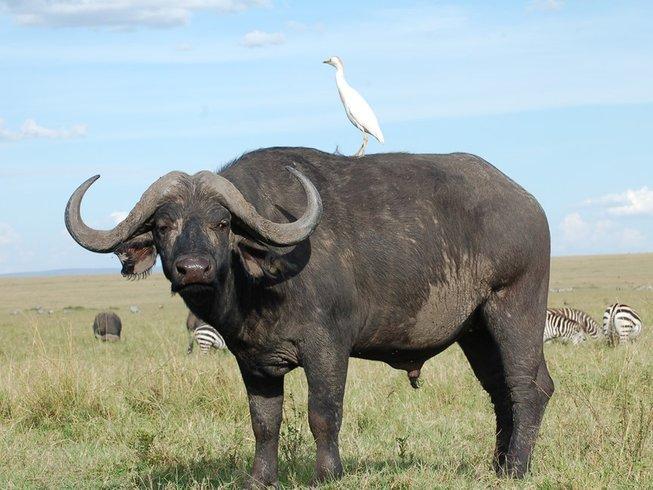 12 Days Luxury Safari in Kenya